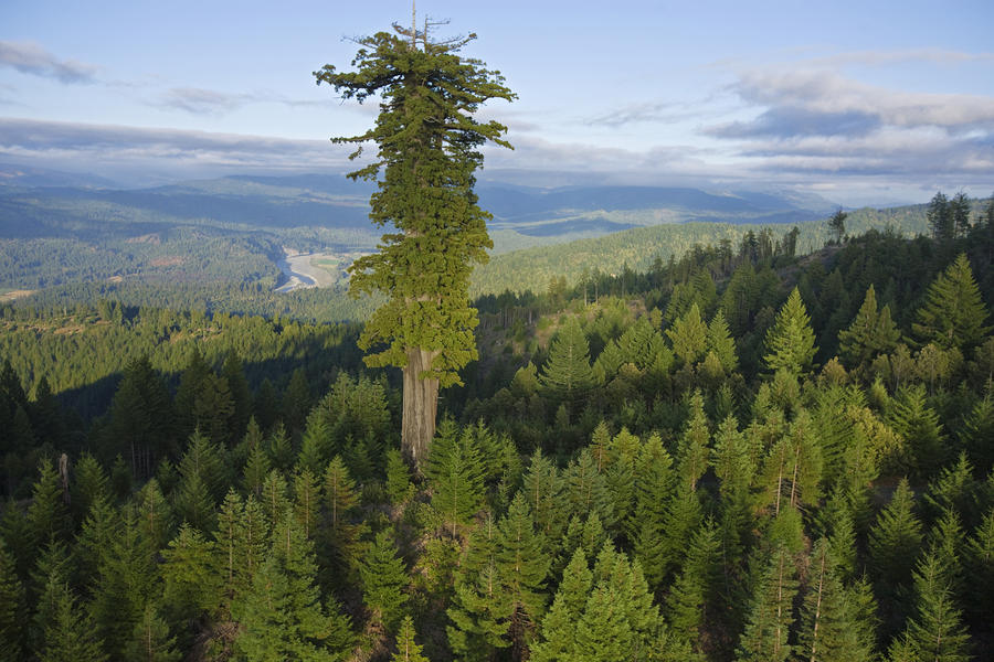 most-high-tree-world (7)