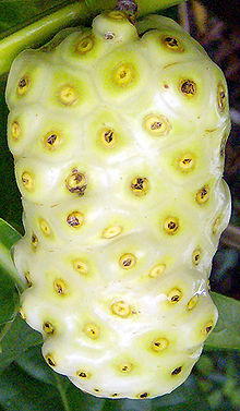 Morinda_citrifolia_Fruit