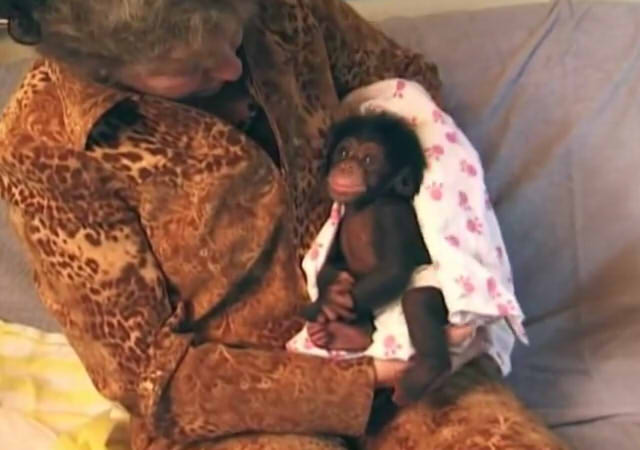 Cute and funny baby of chimpanzee04