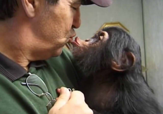 Cute and funny baby of chimpanzee15