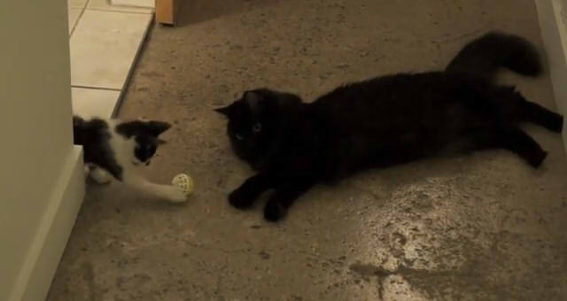 Howtointroduce2cats09
