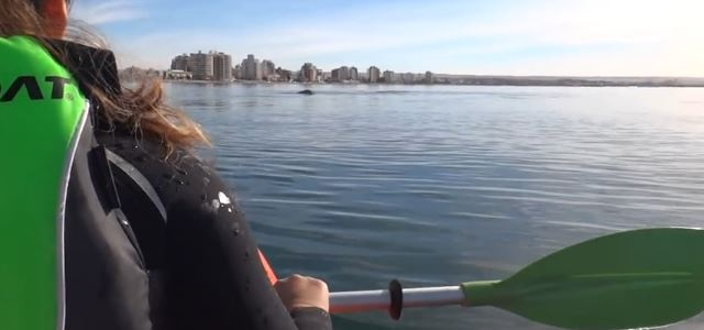 whale_kayak_access