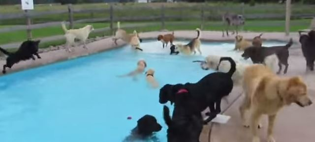 doggy_pool_party