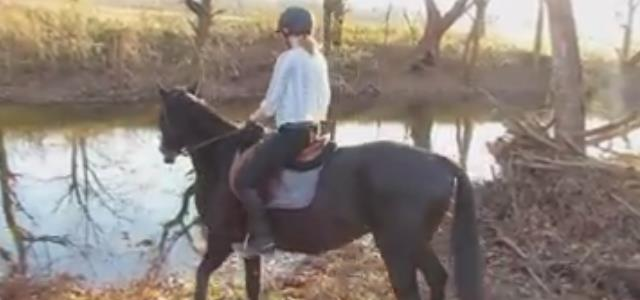 horse_moment_learns_about_river_water