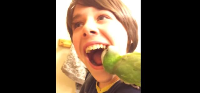 parrot-to-pull-out-teeth