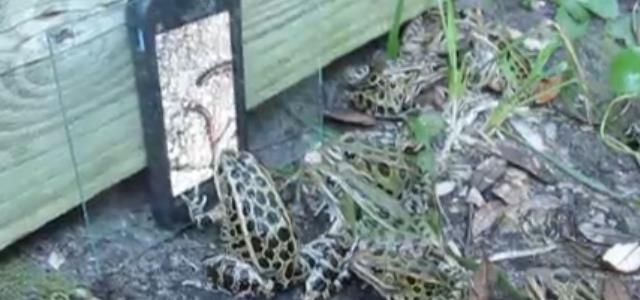 frog_worm_video_fascinated (3)