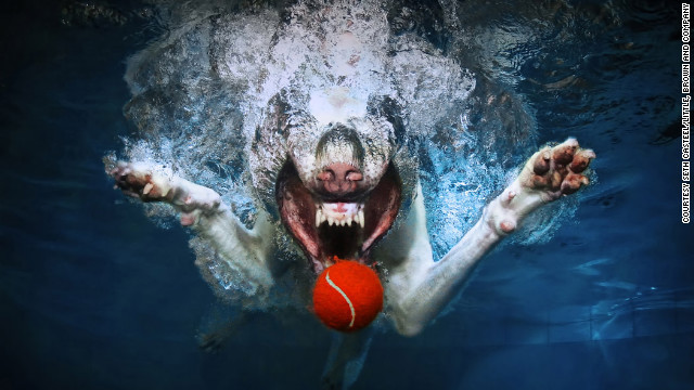 dog-in-water (7)
