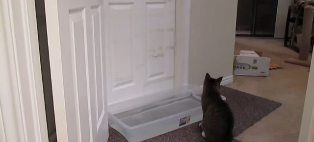 door_countermeasures_cat_topped