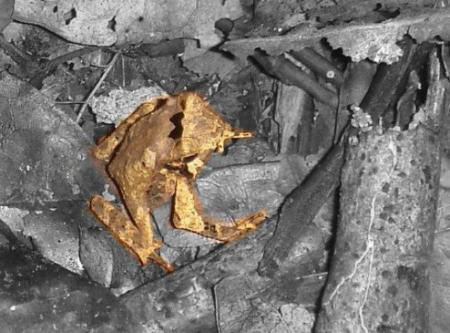 camouflage_frog (1)_s