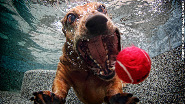 dog-in-water (10)