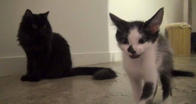 Howtointroduce2cats06