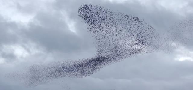 beautiful-woven-pattern-fly-the-starling-sky