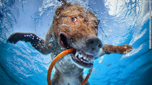 dog-in-water (1)
