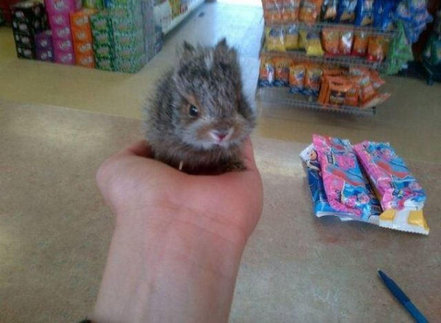 these_funny_animals_1189_640_18