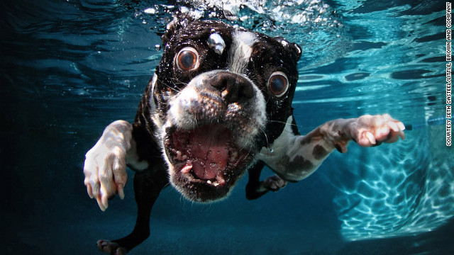 dog-in-water (3)