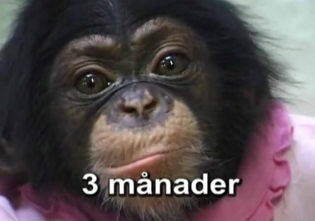 Cute and funny baby of chimpanzee09
