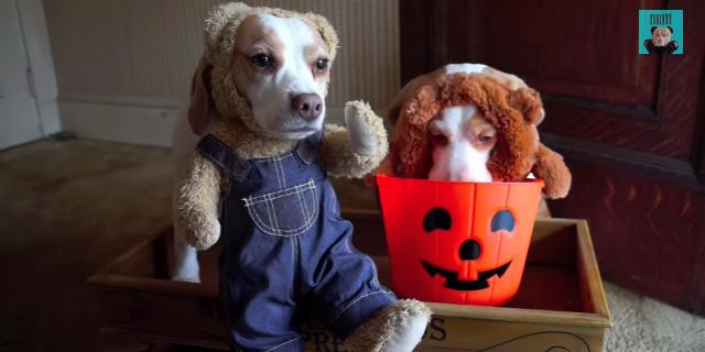dogs_costumes_trick_or_treating_halloween