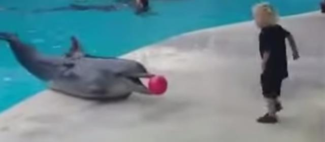 dolphin_boy_ball_playing