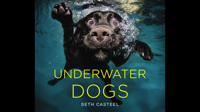 dog-in-water (11)