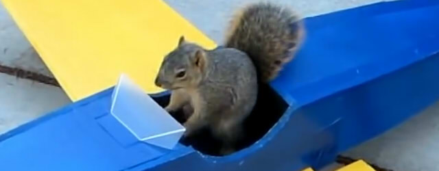 Squirrel-Steals-Airplane4