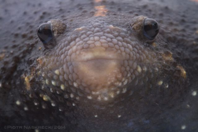 extreme_rare_frog (3)_s