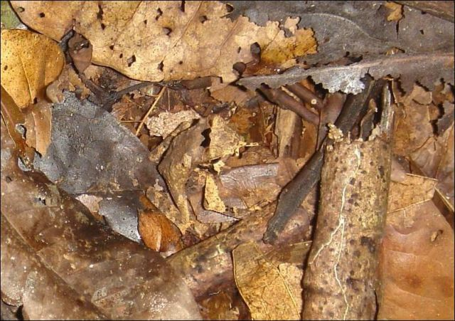 camouflage_frog (3)_s