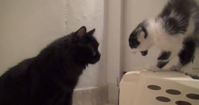 Howtointroduce2cats04