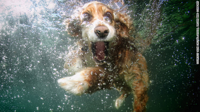 dog-in-water (9)
