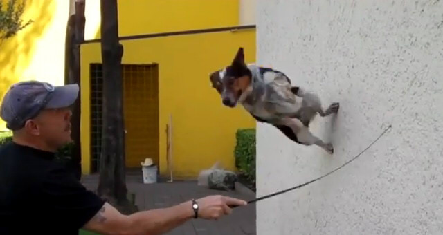 Just Jumpy the dog 7
