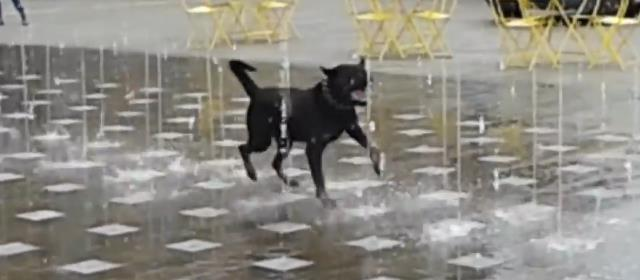 fountain_frolic_cute_dog