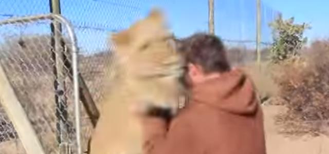 lion_man_attack