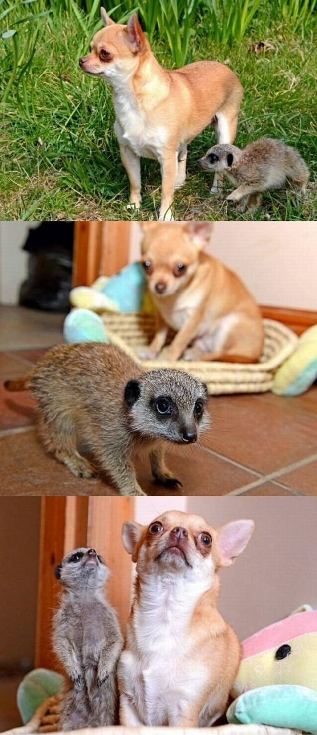 these_funny_animals_1189_640_high_42