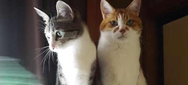 old-and-young-cat (1)