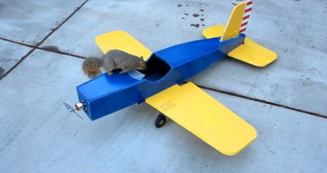 Squirrel Steals Airplane (5)-ss