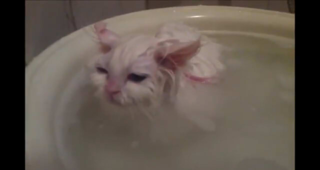 Kitten Refuses to Leave Warm Bath6