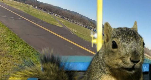 Squirrel Steals Airplane (16)-ss
