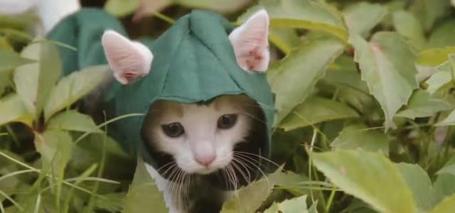 cute_assassin_kittens (1)