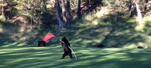 mischievous_bear_cub_plays_flag_golf (9)
