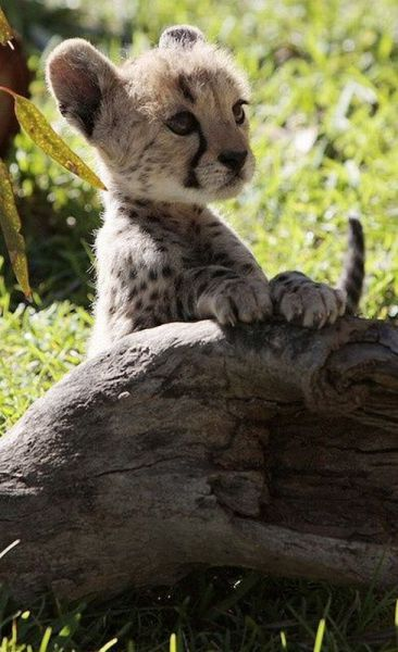 these_funny_animals_1189_640_19