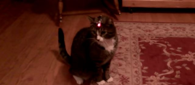 cat_laser_pointer