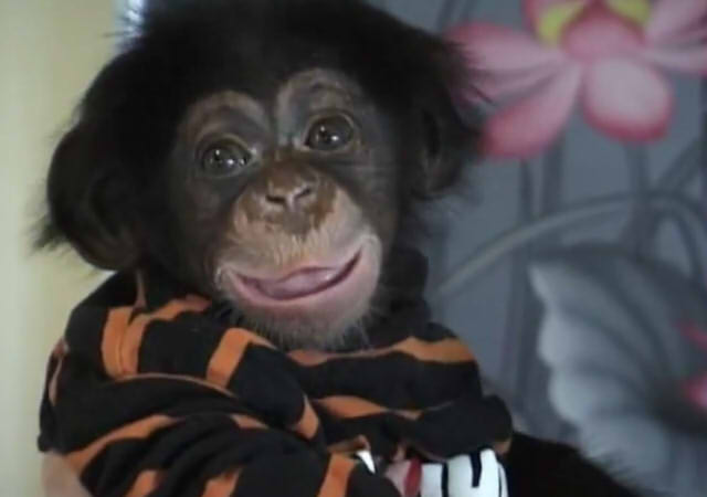 Cute and funny baby of chimpanzee08