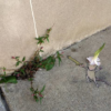 デビッド·ジンがチョークと木炭で描く錯視による3Dストリート・アート