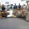 でか過ぎぃ!パナマ運河で世界最大級の巨大ワニが捕獲される!