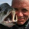 淡水域で捕獲された驚くべき珍しい20種の怪物魚たち